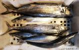 氣溫急降小漁船減少出海捕撈 鮮活海鮮量少價高 普通海鮮足夠供應