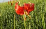 美麗的錫林郭勒大草原