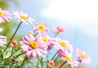 悟禪心語:收集了一些讓人心裡平靜的句子,看一看心情平和喜樂