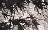 暴風雨中的那根竹子