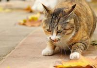 養貓是一件麻煩的事嗎?鏟屎官:是的,怕麻煩的人就不要養了!