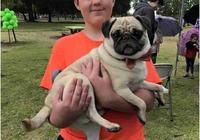 送給美國自閉症男孩最好的生日禮物,哈巴狗!