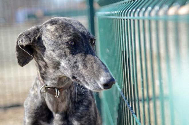 西班牙賽狗:狗是狗,人卻不一定是人