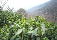 皮日休與陸龜蒙的20首經典茶詩《茶中雜詠&奉和襲美茶具十詠》