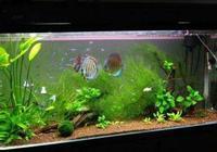 為什麼有的魚友使用草缸飼養觀賞魚,從來也不用清理底沙?