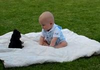 約克夏遇上寶寶 約克夏:這個人類也太弱了~