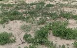 黃驊古貝殼堤,世界三大古貝殼堤之一