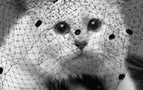 老佛爺去世12億遺產繼承者是隻貓,它將成為世上最富的貓