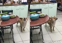 晚餐還沒煮好!浮誇柴露出「嗯~好香」臉:我的雞腿咧?