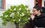 懶人也能把花兒綠植養好-最容易養的植物榜單