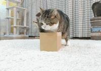 奇聞:這隻貓證明了,你家喵星人可能是液體!