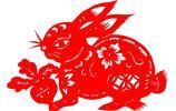 十二生肖 兔 好可愛的兔子 想養兔子了