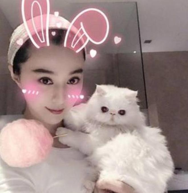 林更新,薛之謙家的狗,baby和冰冰養的貓,明星愛寵萌翻天