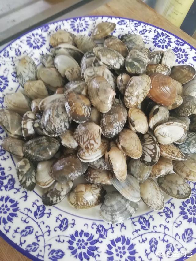 休漁期開始,日照海鮮漲價了嗎?哪些海鮮還能吃?你怎麼看?