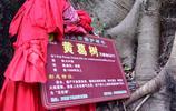 千年菩提樹生長在貴州興義萬峰林中