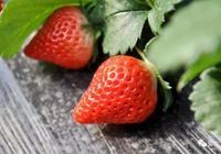 草莓果實,這些都不知道,別說你是種草莓的