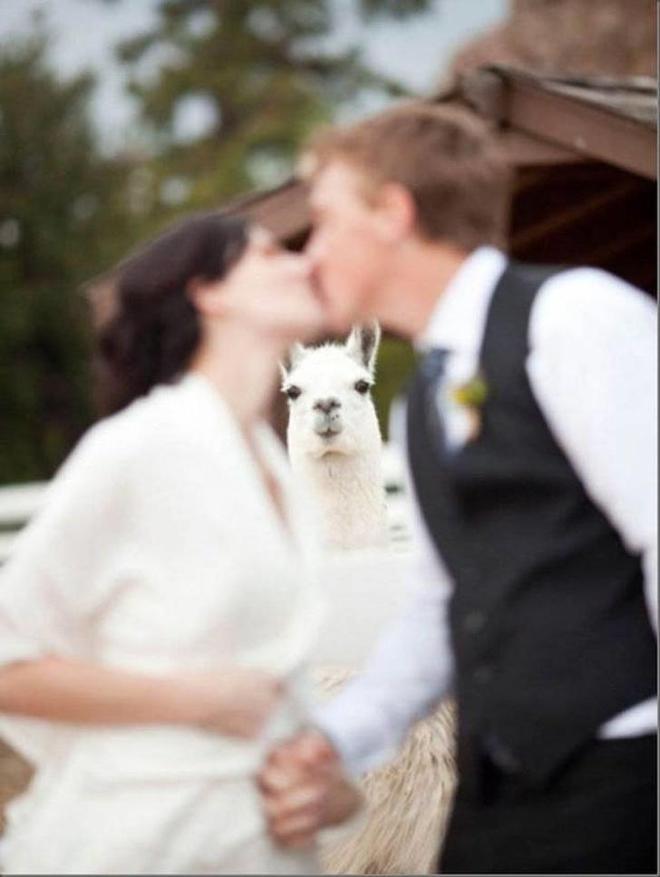 動物也瘋狂,更會搶鏡!看這些搞怪照片,你會對它們有更深瞭解