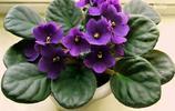 花卉攝影系列——紫羅蘭