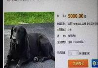 千萬別在網上買狗,買家秀和賣家秀,看了想哭!