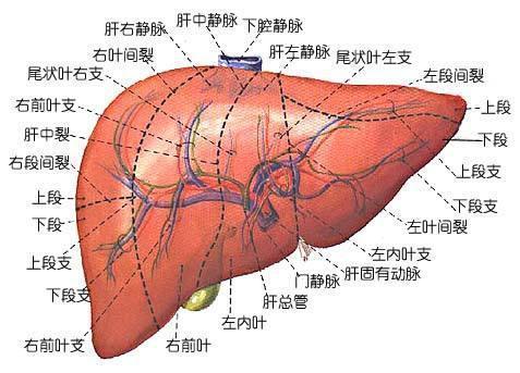 肝癌晚期如何治療?羅家英先生的晚期肝癌痊癒了嗎?