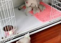 貓媽摟著懷裡的貓崽,主人提醒外面還有貓崽,網友:不用管