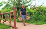 農民種植10畝桃園,採摘價每斤4元,為什麼採摘的遊客這麼多?