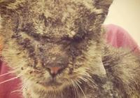 流浪貓患疥癬眼睛幾乎失明,被抱起後它依偎在肩膀上,渴望被愛模樣惹人疼!