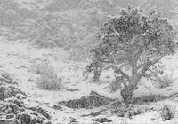 冷!雨!雪!小雪花們即將抵達安徽!中央氣象臺發佈了!