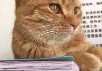 世界上最受喜愛的8種寵物貓,第五種60%中國鏟屎官養過,有你嗎?