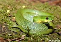 為什麼有人反對進化論?蛇是蚯蚓進化來的,蝙蝠是老鼠進化來的,多明顯的事實,他們為什麼也會反對?