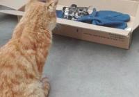 貓媽生了6只,貓爸趕來一看非常失望!