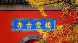 """這裡被譽為""""金陵第一明秀山"""",是中國四大賞楓勝地之一"""