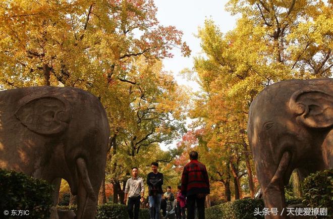 南京明孝陵:霜降後的深秋時節,美麗景色宜人,引來眾多遊客觀賞