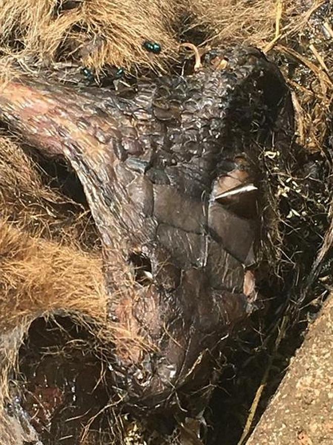 男子在草叢中聞到異味,發現巨物叢林裡被噎死