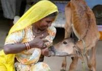 """印度人喝的紅牛才是真正的""""紅牛"""""""
