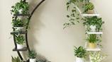 去嫂子家做客,瞧到逛宜家買的精緻花架,太美了,放陽臺經濟實用
