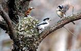 山區農村的鳥很多 有各種各樣的鳥就有各種各樣的巢