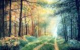 一個人眼裡一個世界,10位藝術家用他們的畫筆詮釋不同的森林之美