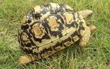 動物圖集:陸龜