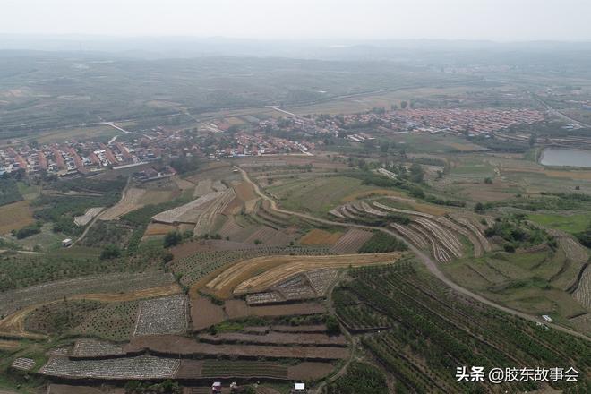 組圖:露天桑椹熟了,看煙臺萊陽這個村豐收的場景