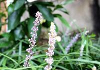 小花和小草