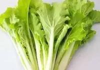 綠葉蔬菜怎樣用冰箱保存保鮮?