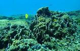 斯米蘭群島旅遊實拍:是一些世界上最美麗的、未損壞的島嶼