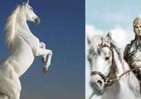 人中呂布,馬中赤兔,細談三國裡的十大名馬
