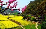 湖南張家界景區內油菜花盛開,一望無際蔚為壯觀,原生態沒門票
