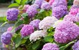 這幾種爬藤植物,很簡單就讓你家院落成為小花園
