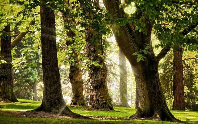 讀點|我要給父親種棵樹,幫他收留那漸漸老去的時光