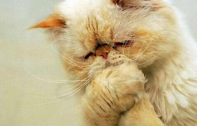 """""""沒有本喵搞不定的東西,除了仙人掌!""""10張貓咪趣圖讓你笑不停"""