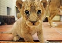 動物小時候的合集照,萌化你的心