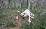 真實版忠犬八公主人去世後不管風吹雨打,它依舊日日來陪伴!